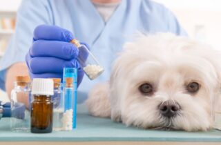 maltese puppy health problems