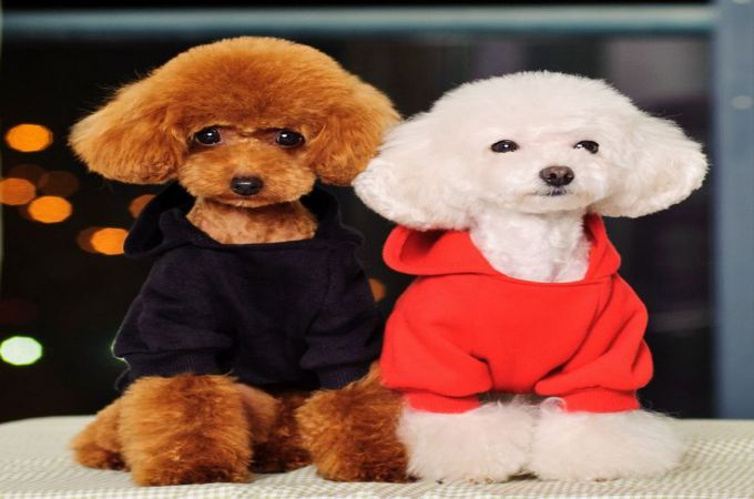 Poodle Haircuts and Clips List