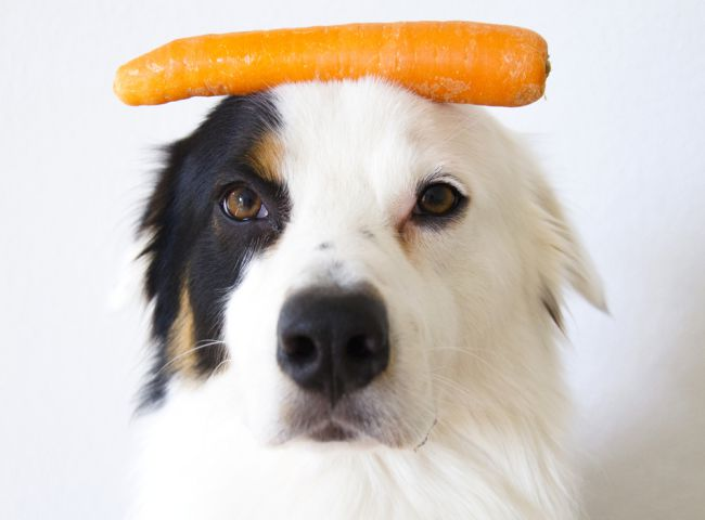 Dog Playing With Carrot