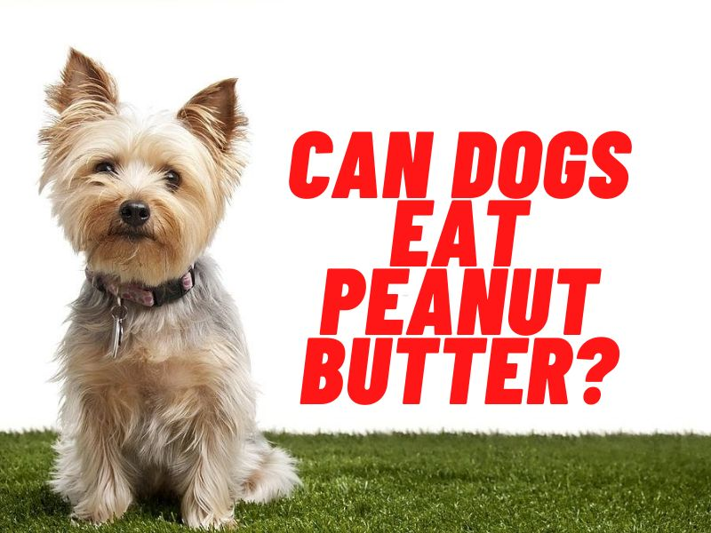 can dogs have peanuts & peanut butter?