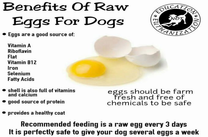 Raw-Eggs-Benefits-to-Dogs