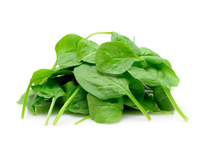 fresh spinach for dogs