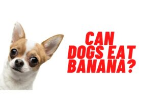 can dogs eat banana guide