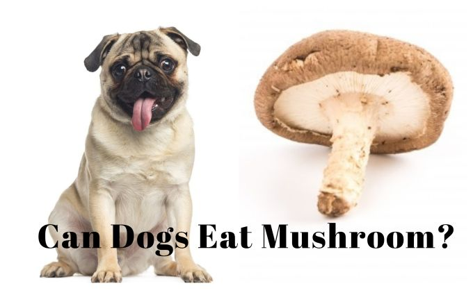 can dogs eat mushroom guide