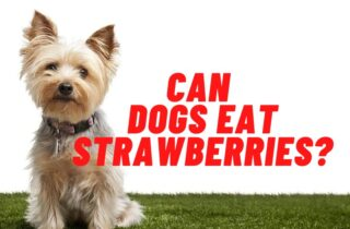 can dogs eat strawberries guide