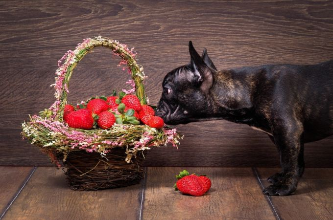 Dogs want to eat strawberries