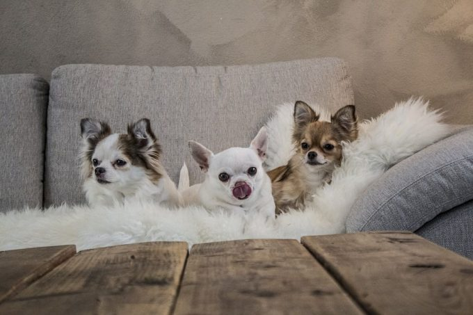 Adorable Small Dogs For Kids