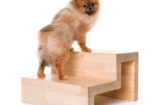 10 Best Pet Stairs for Small Dogs