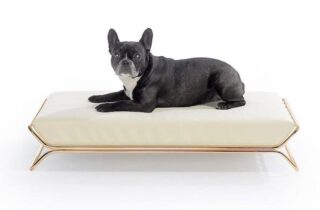 The Best Chew Proof Dog Bed List