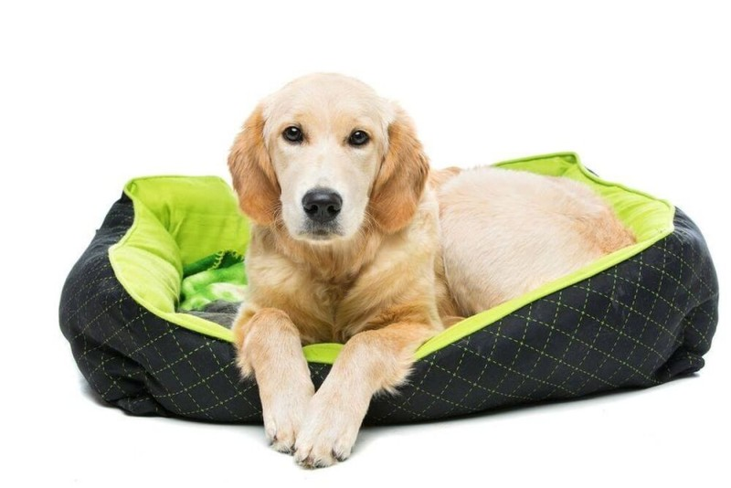 Dog inside a chew proof dog bed
