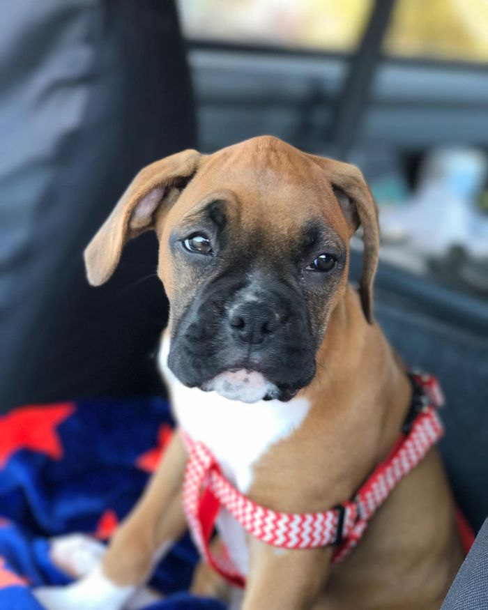 adorable looking brown puppy