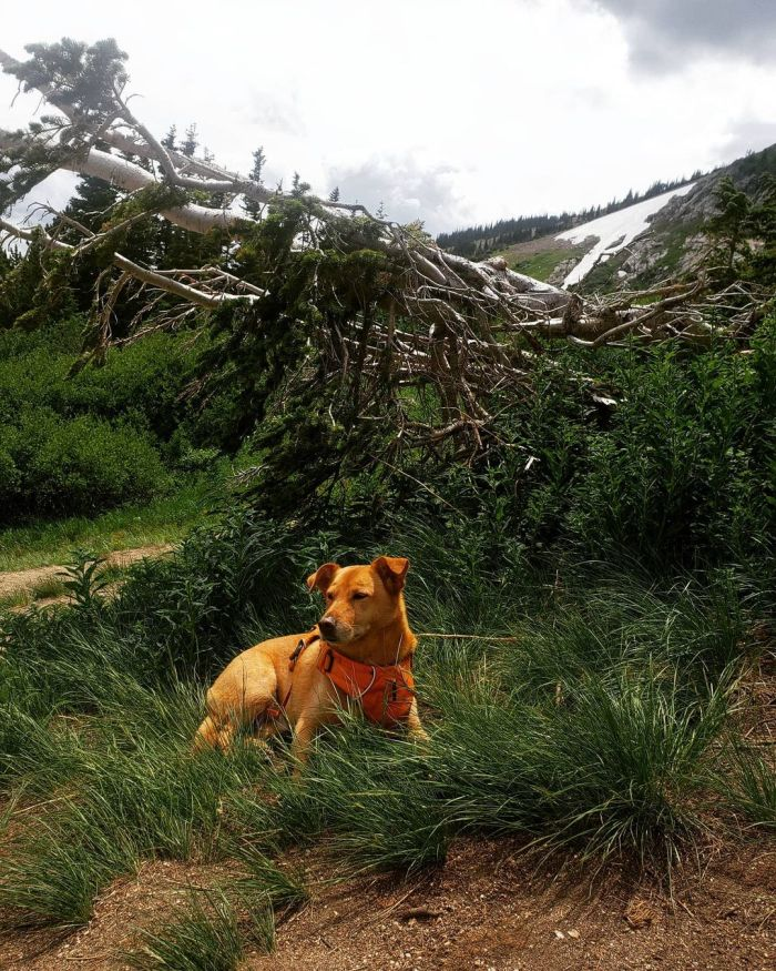 mixed dog breed in the forest