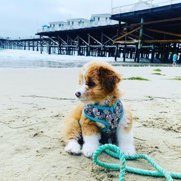 dog out on the beach