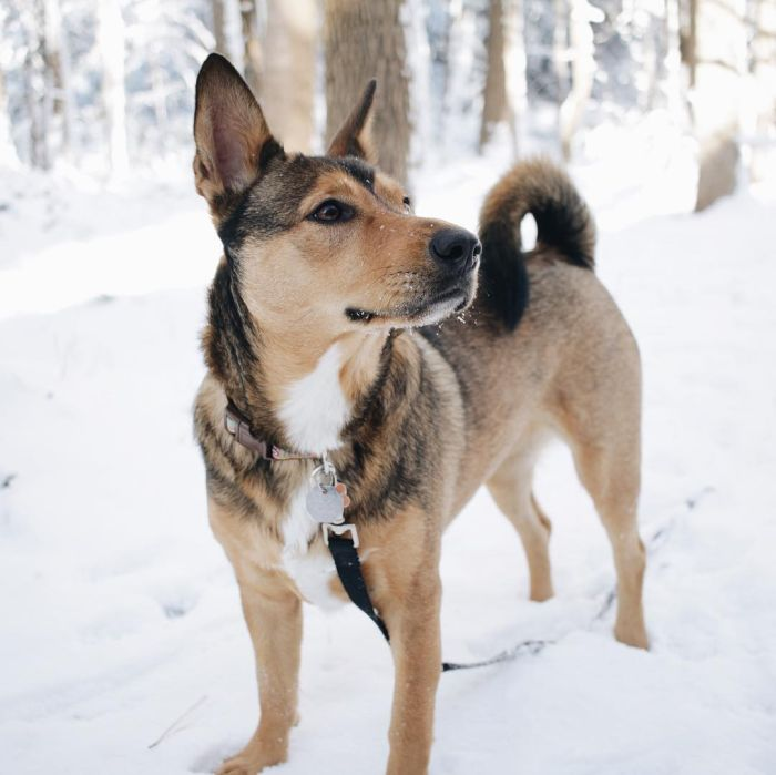 mixed dog breed out in the snow