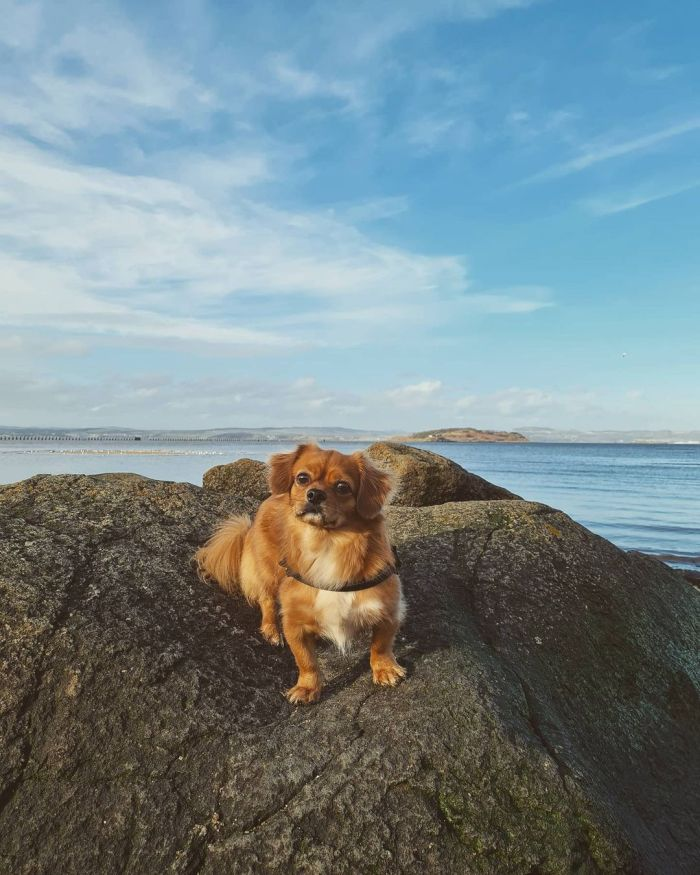 mix breed dog posing on a rock